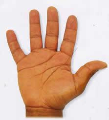 PalmReading-Earth-Hand1